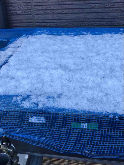 ポリカーボネート板に積もる雪