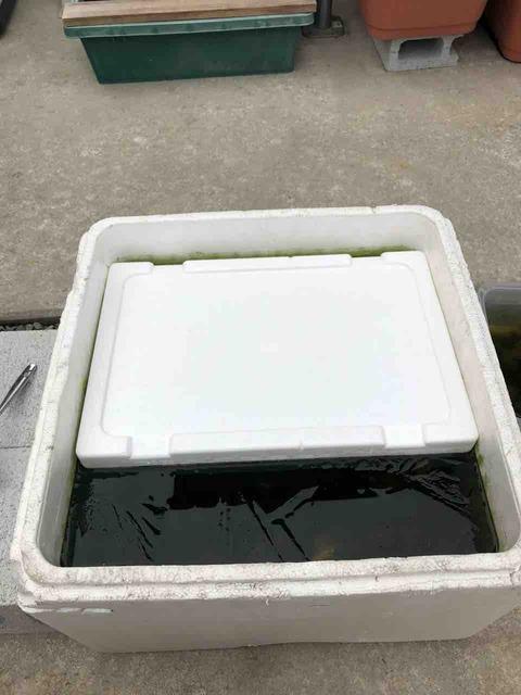 メダカ容器の凍結防止策