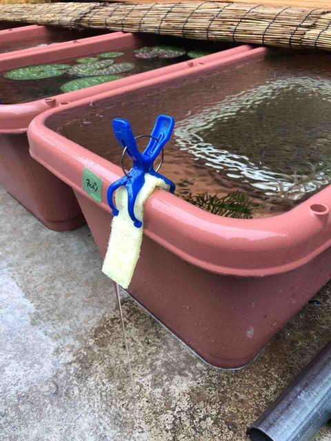 メダカ容器のオーバーフロー対策