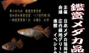 第5回鑑賞メダカ品評会
